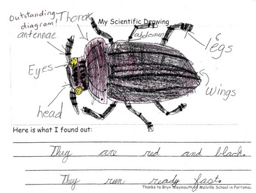 Bess beetle home this is a diagram of the parts of a bess beetle ccuart Choice Image